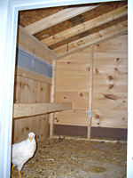 View of Perch & Back Side of Coop